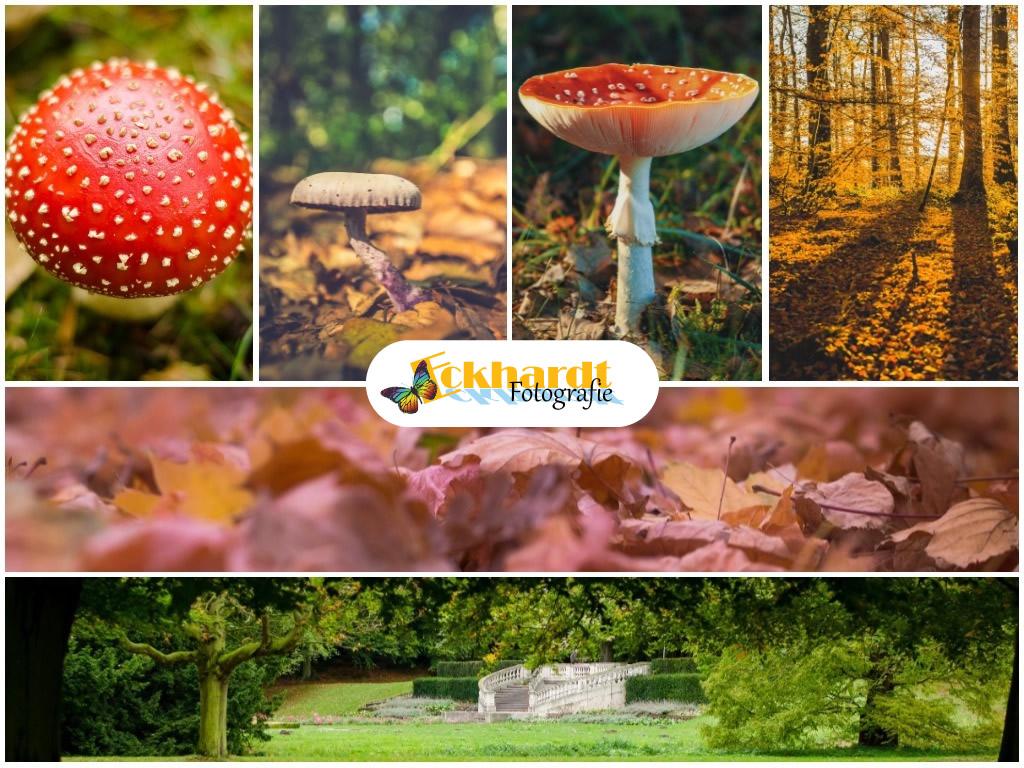 fotograferen in de herfst