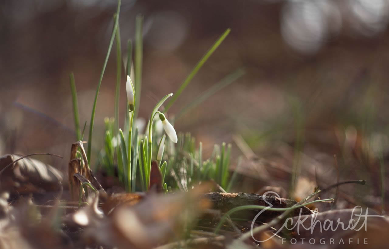 Het is tijd voor het voorjaar