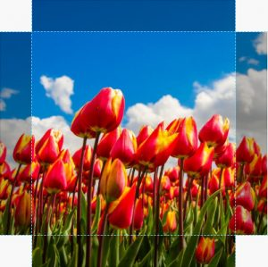 Canvas Tulp 01