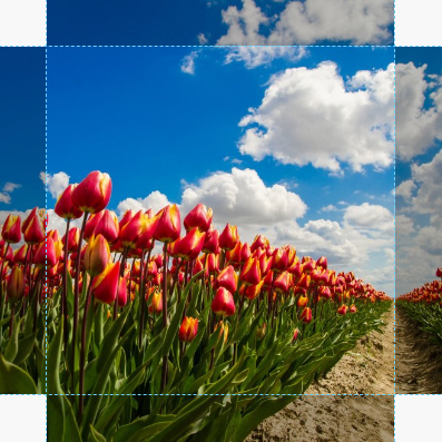 Canvas Tulp 02