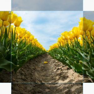 Canvas Tulp 07