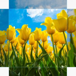 Canvas Tulp 08