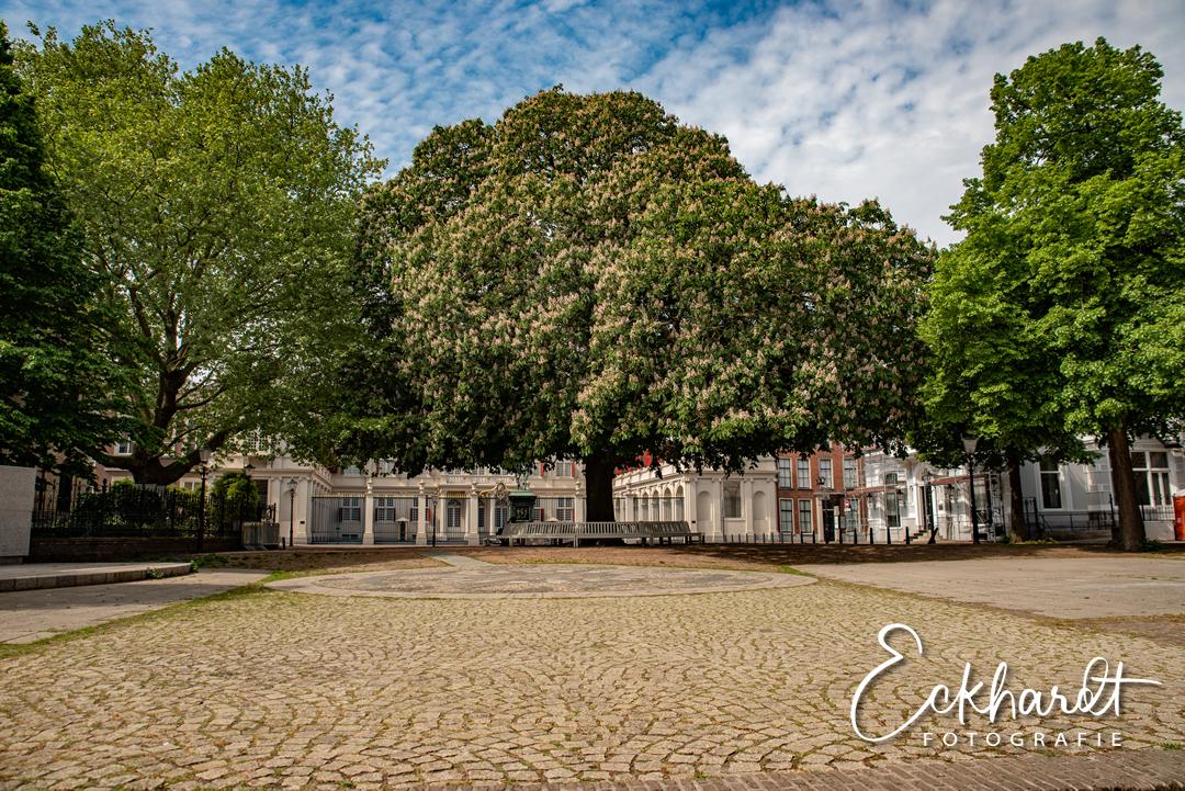 De Haagse Postzegelboom