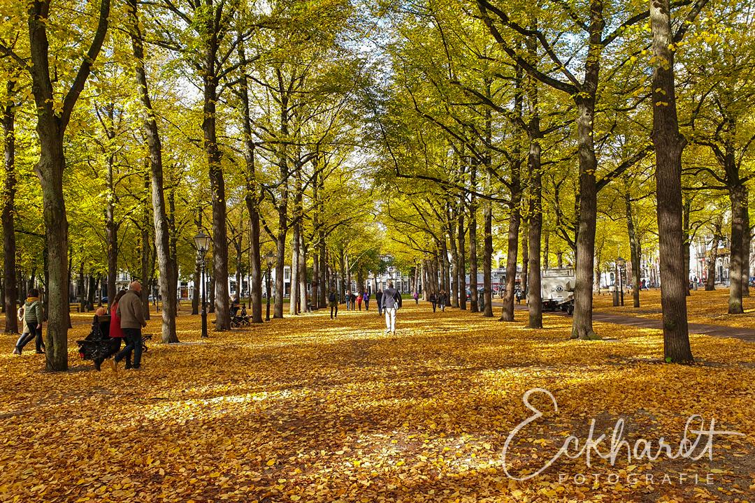 De mooiste herfstkleuren in Den Haag