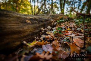 Paddenstoelen in het bos 02