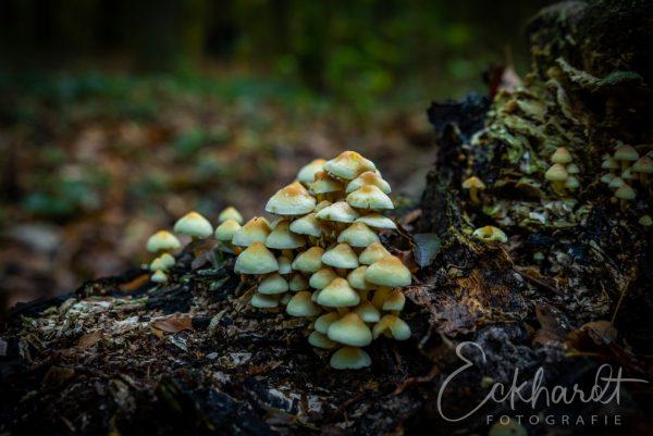 Paddenstoelen in het bos 04